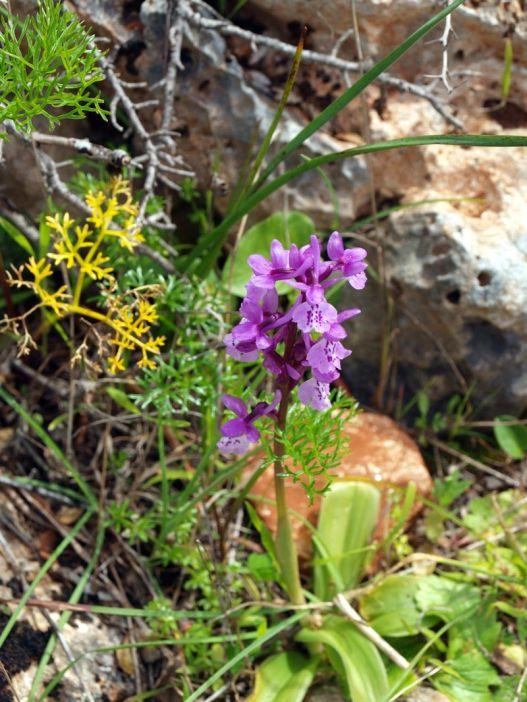 Les fleurs de l'Algarve